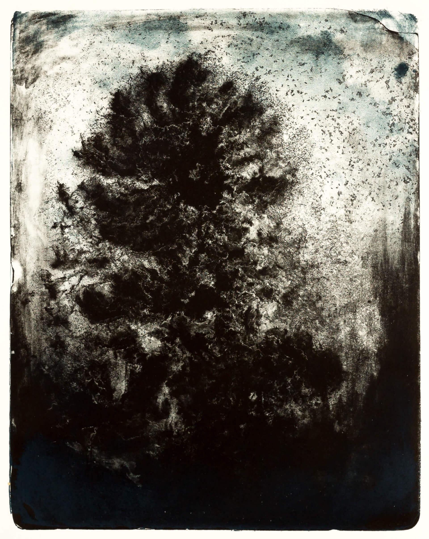 Katharina Albers, Wald X(N)-XVI, 2016, Farblithographie, 50x40 cm, Unikat