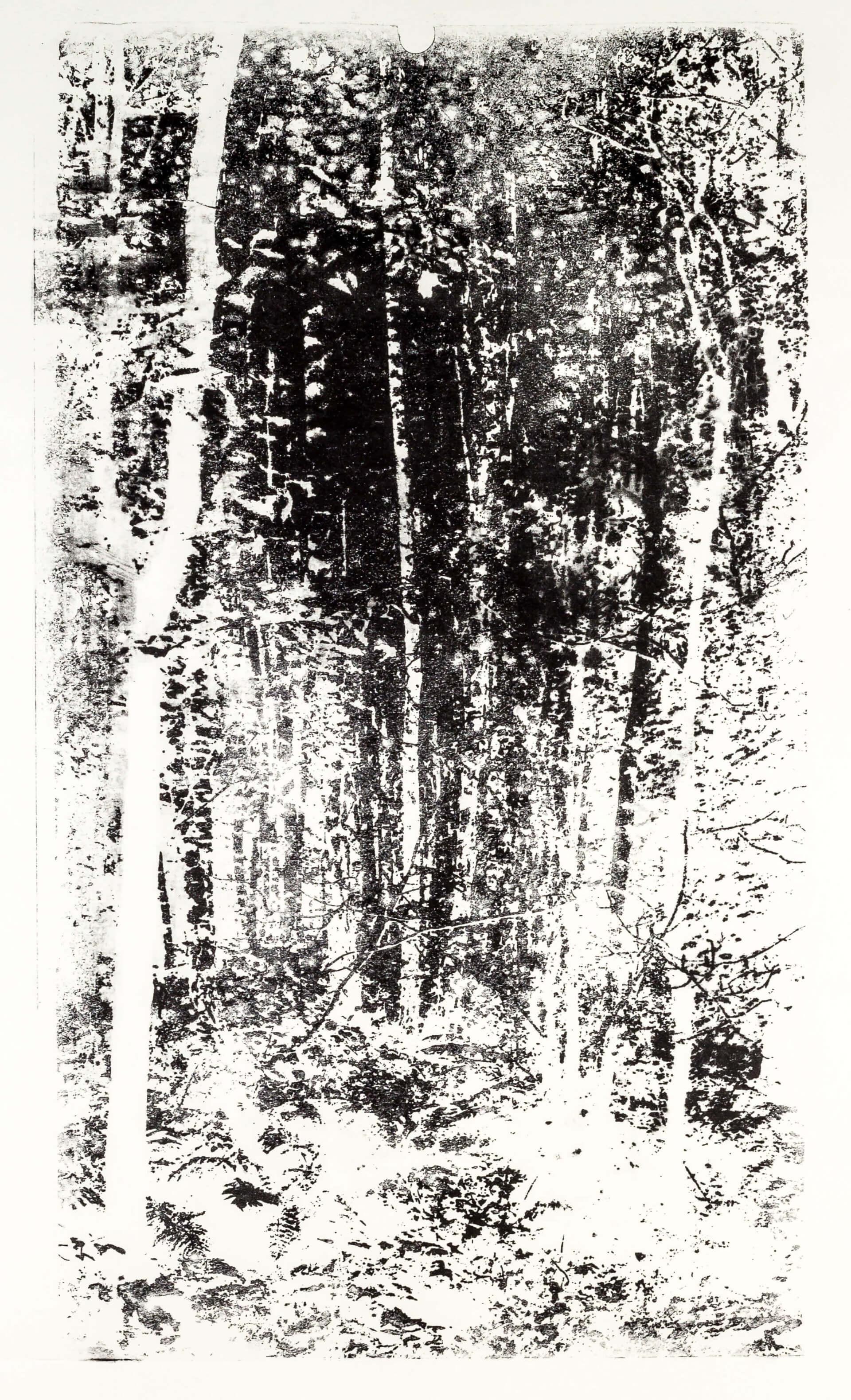 Katharina Albers, Wald XX-III, 2015, Lithographie, Unikat, 60×33 cm