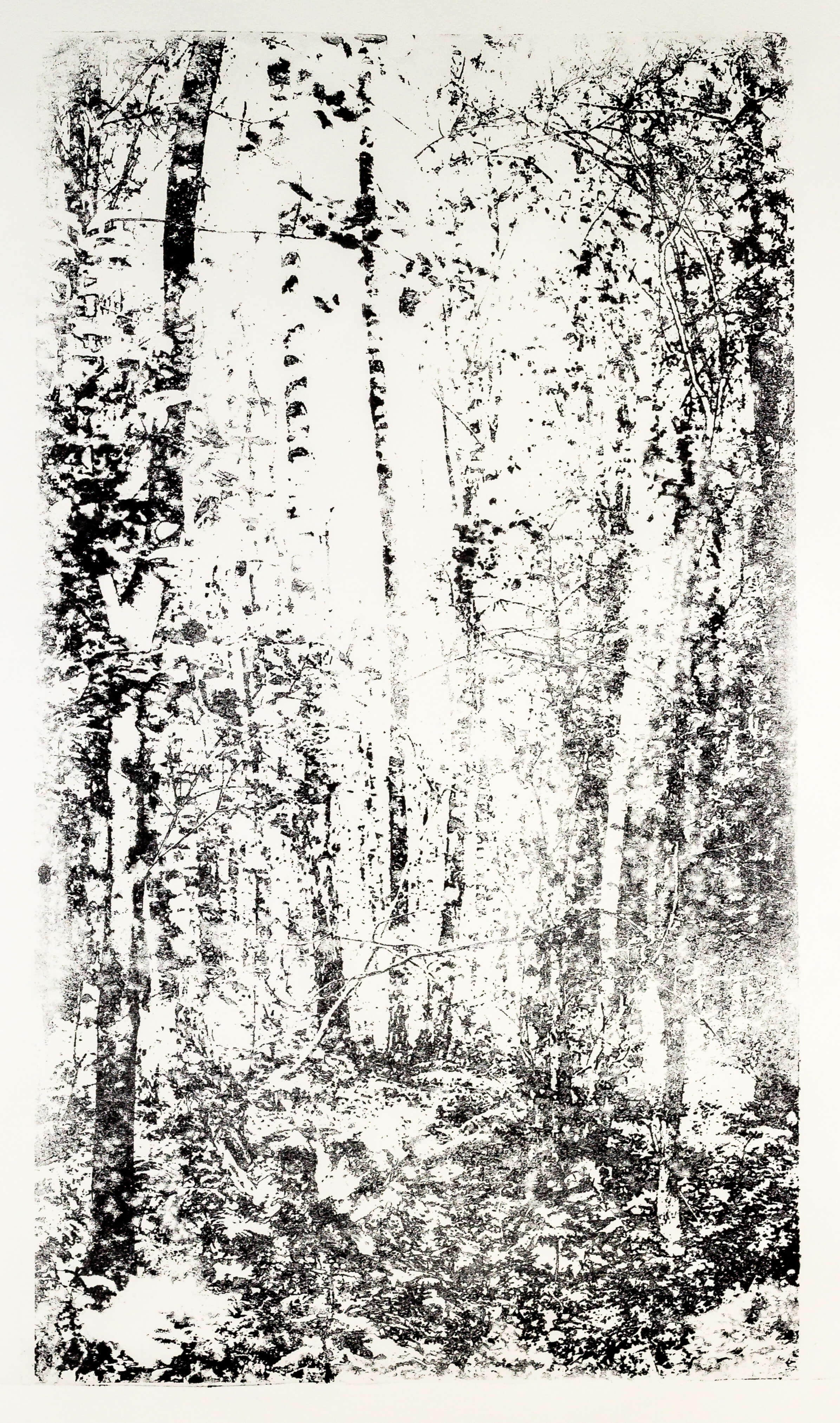 Katharina Albers, Wald XX-IV, 2015, Lithographie, Unikat, 60×33 cm