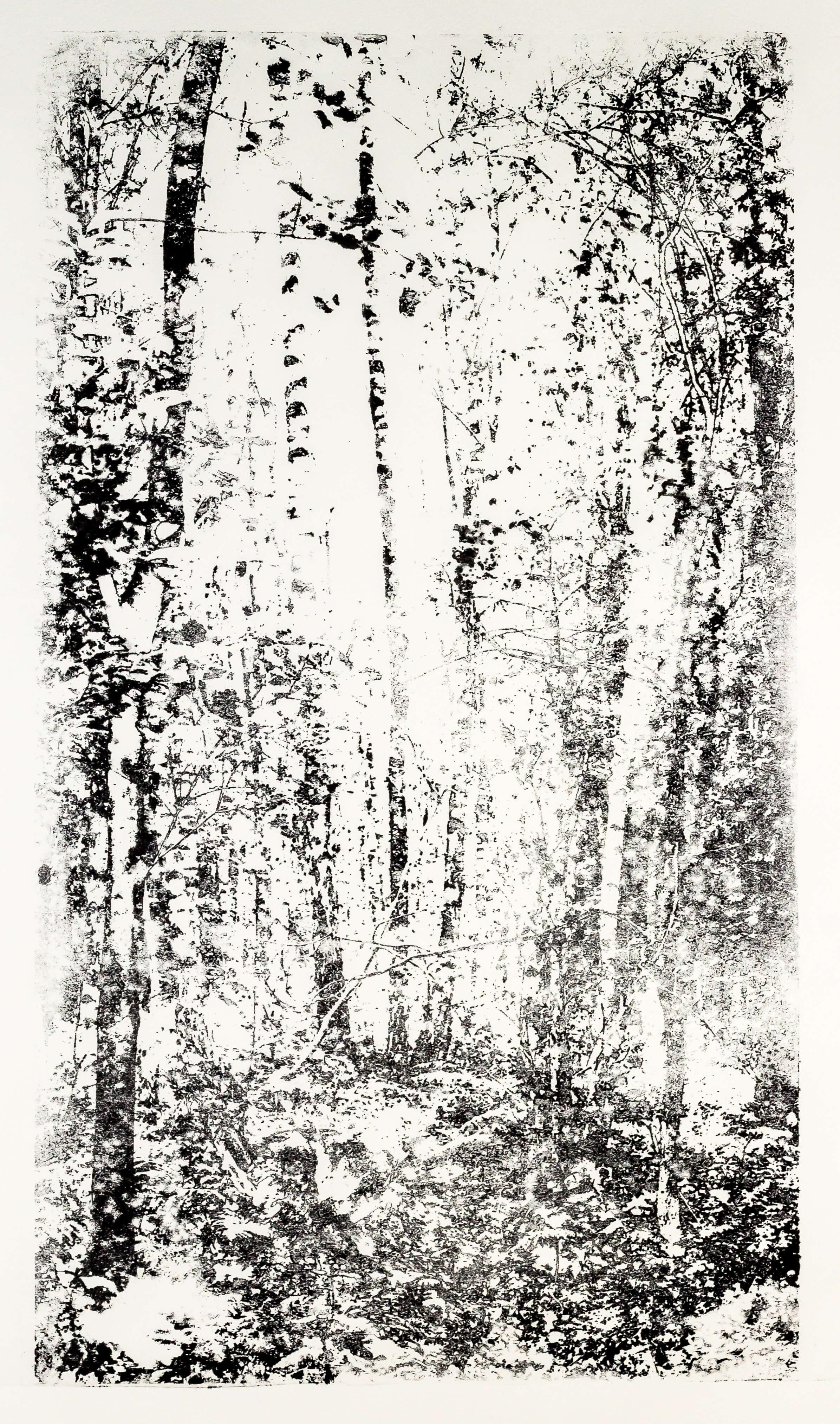 Katharina Albers, Wald XX-IV, 2015, Lithographie, Unikat, 60×33 cm