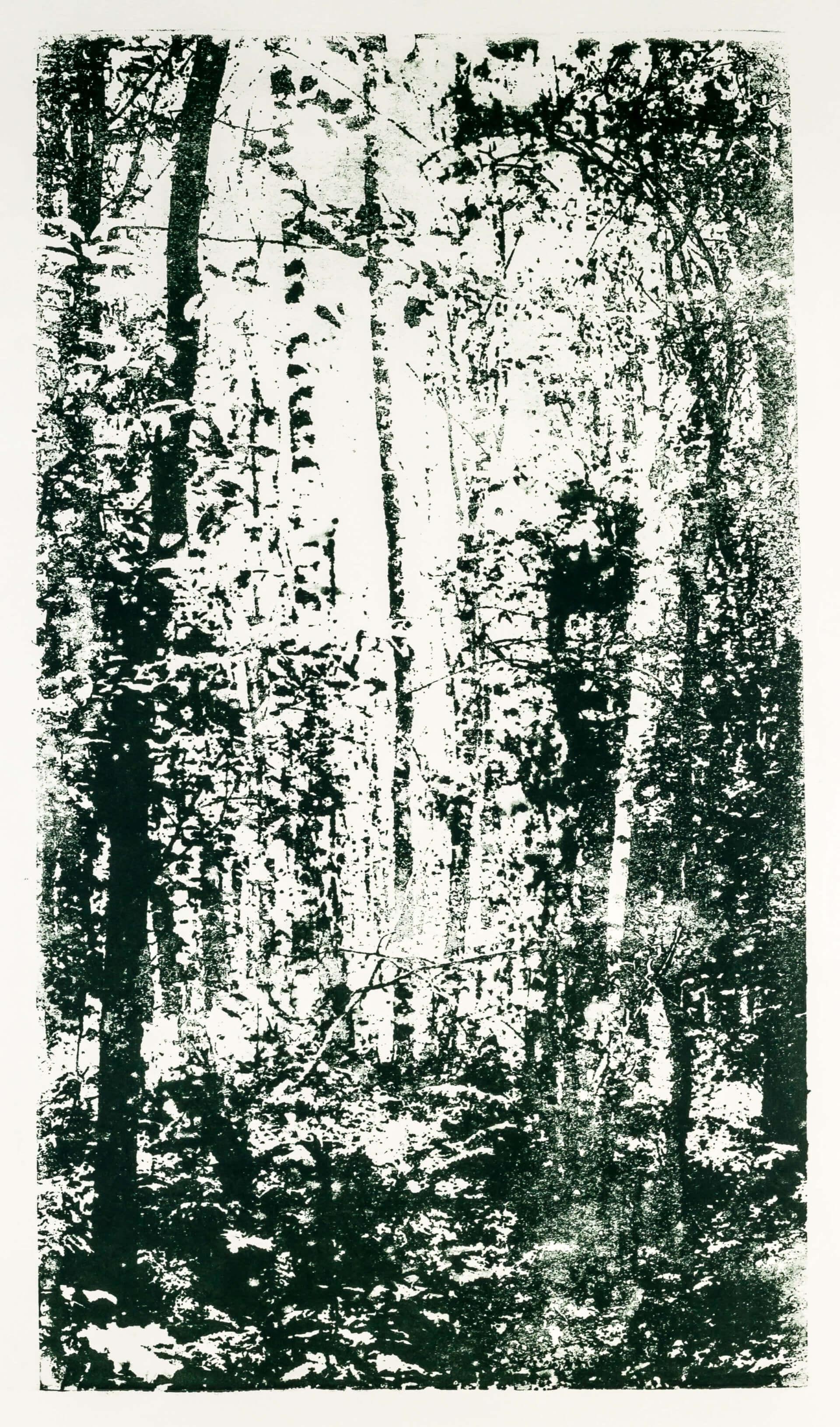 Katharina Albers, Wald XX.I-I, 2015, Farblithographie, Unikat, 60×33 cm