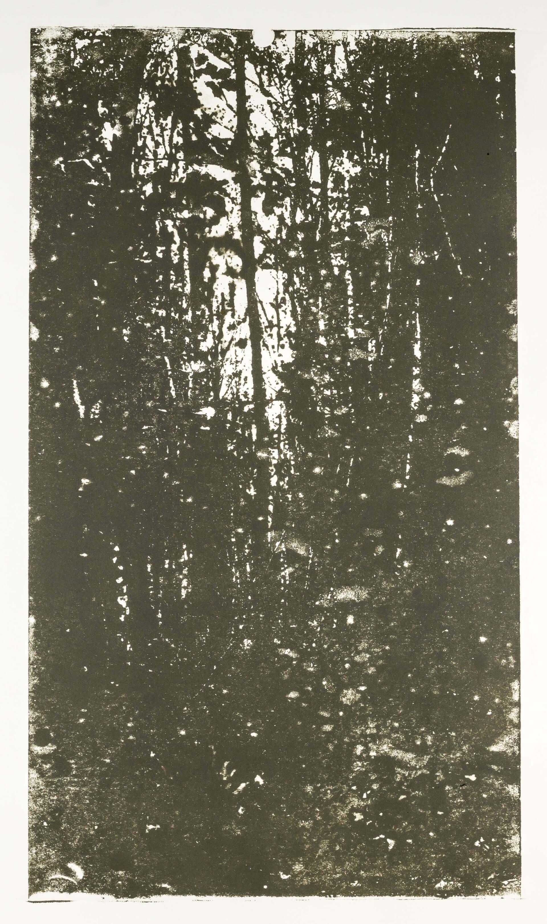 Katharina Albers, Wald XX.I-II, 2015, Farblithographie, Unikat, 60×33 cm