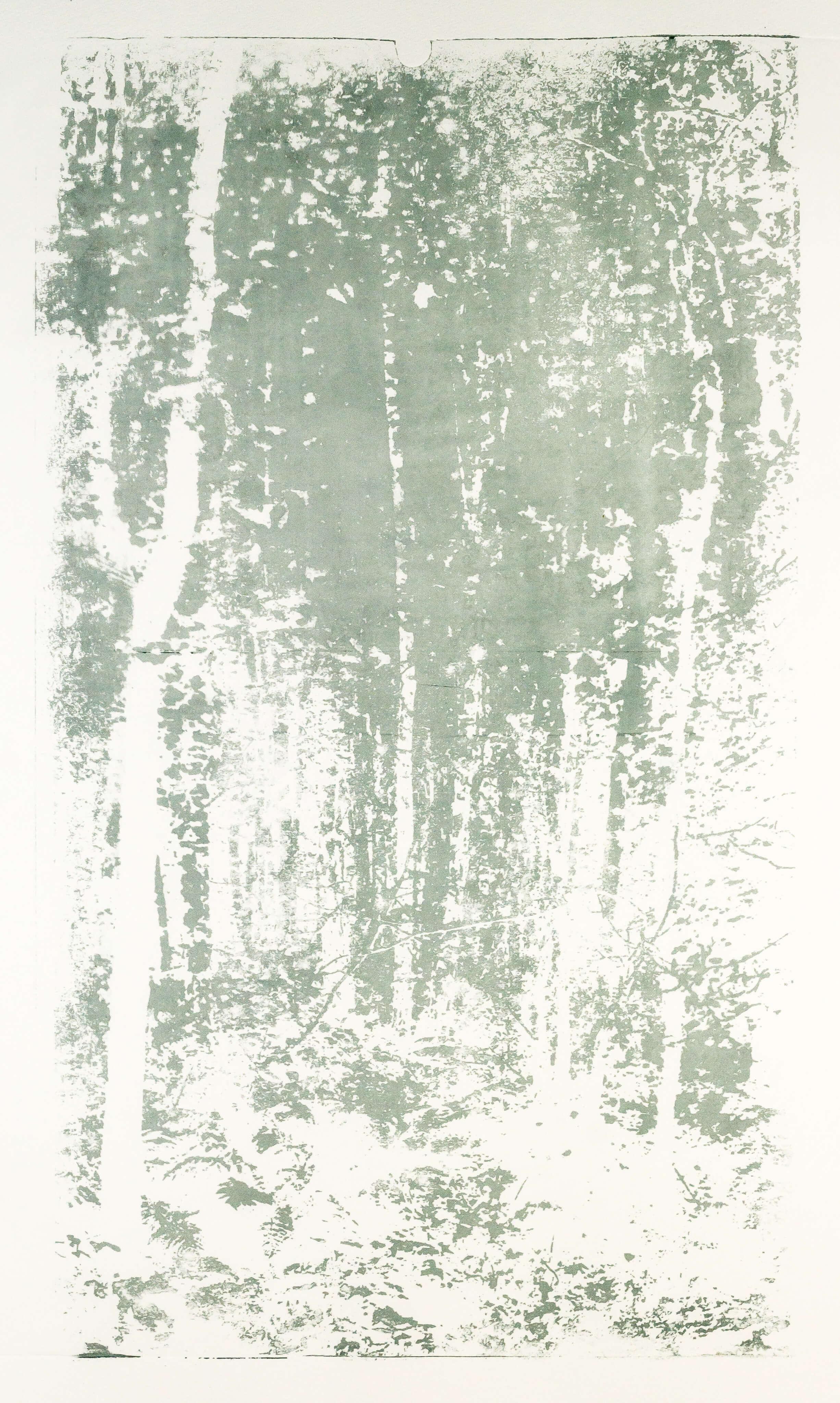 Katharina Albers, Wald XX.I-III, 2015, Farblithographie, Unikat, 60×33 cm